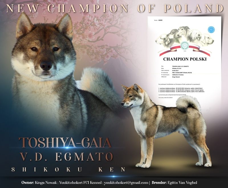 CHAMPION OF POLAND